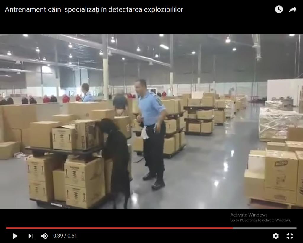 caini specializati detectarea explozibililor (1)