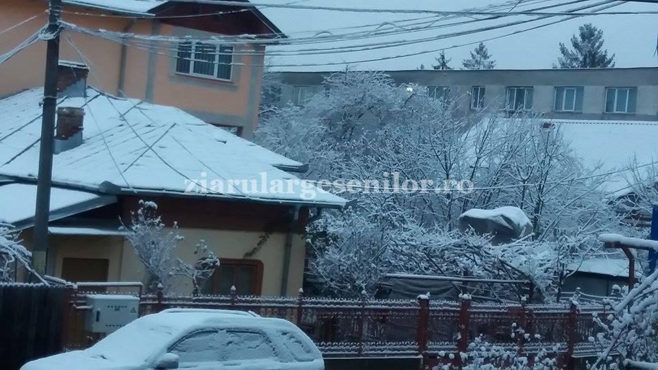 ninge-pitesti-1